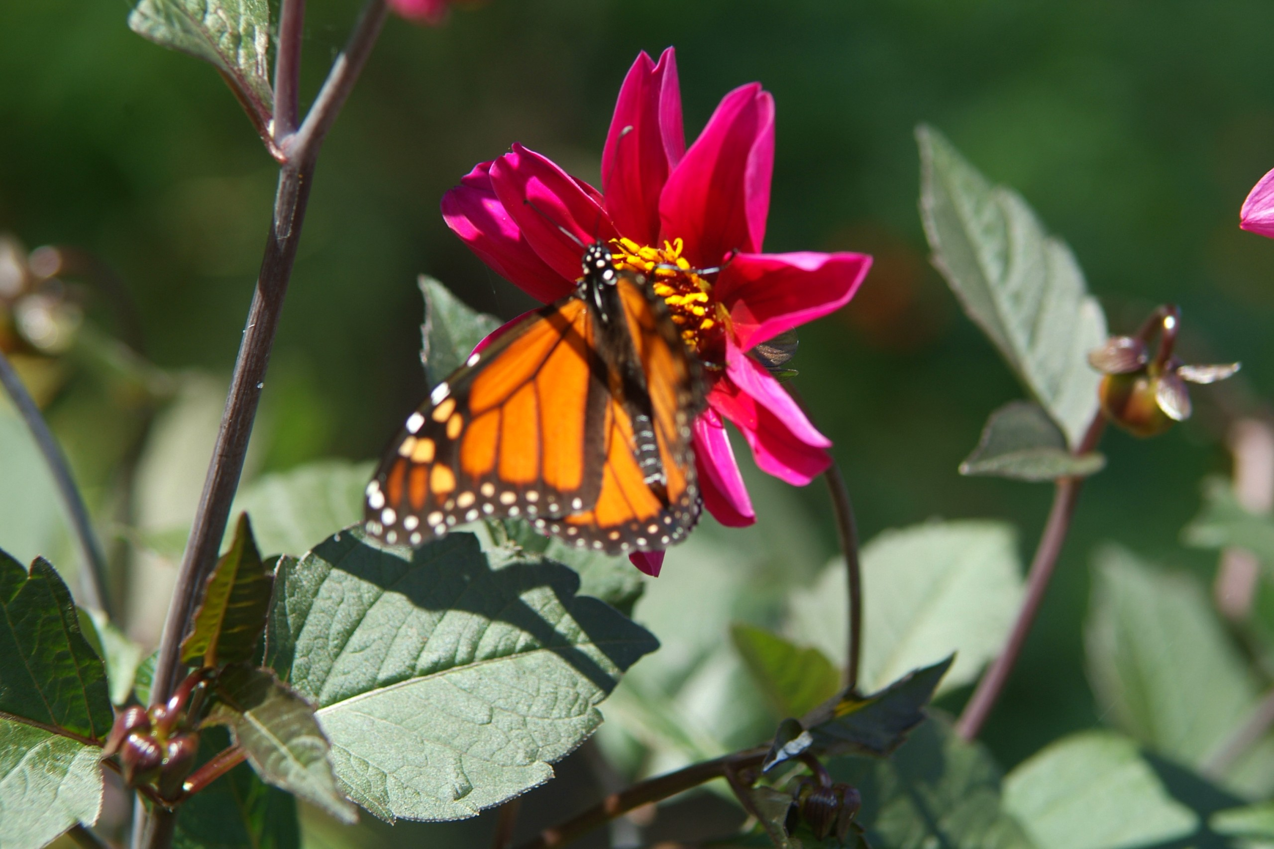 Flower in Butterfly Garden